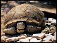 Turtle crashes photo shoot